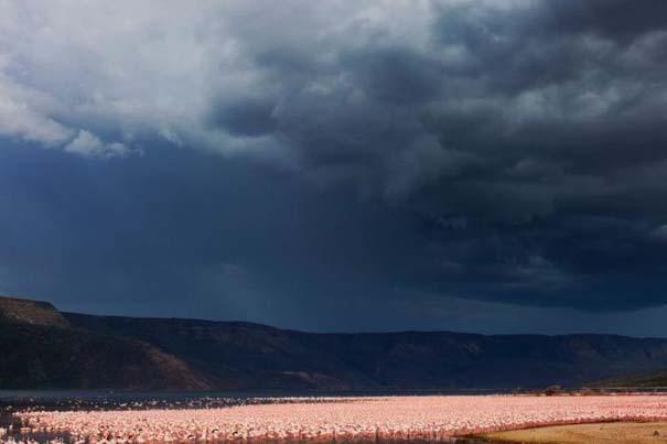 Nakuru: Η λίμνη με τα εκατομμύρια Flamingos (11)