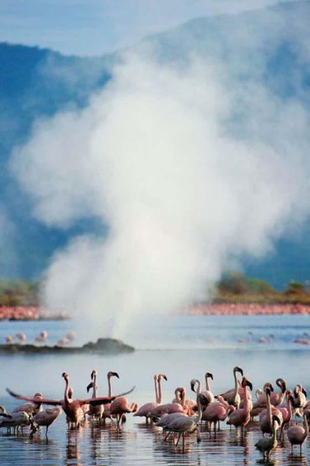 Nakuru: Η λίμνη με τα εκατομμύρια Flamingos (13)