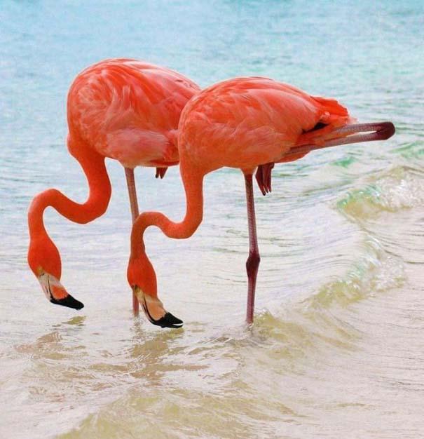 Nakuru: Η λίμνη με τα εκατομμύρια Flamingos (14)
