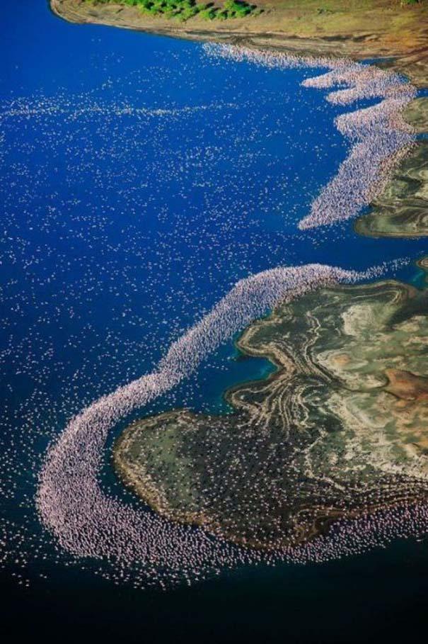 Nakuru: Η λίμνη με τα εκατομμύρια Flamingos (20)