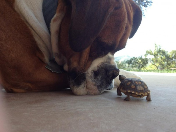 Η φιλία μέγεθος δεν κοιτά | Φωτογραφία της ημέρας