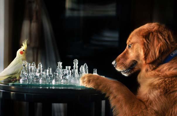 38 πορτραίτα σκύλων που θα λατρέψετε! (2)