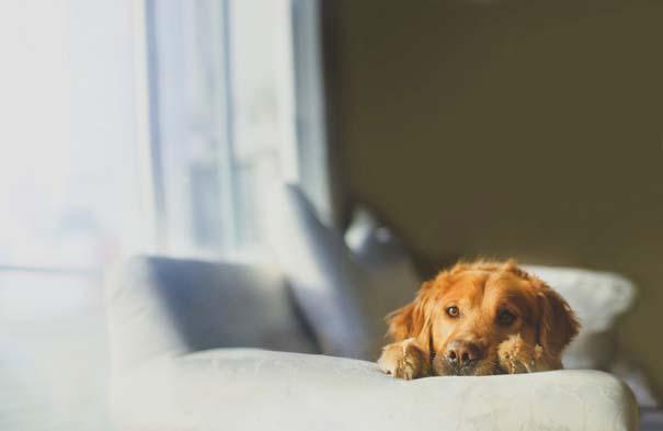 38 πορτραίτα σκύλων που θα λατρέψετε! (5)