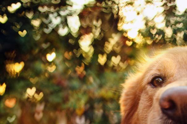 38 πορτραίτα σκύλων που θα λατρέψετε! (6)