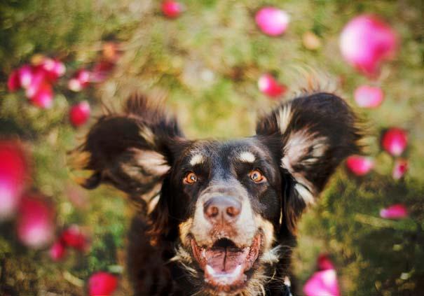 38 πορτραίτα σκύλων που θα λατρέψετε! (7)