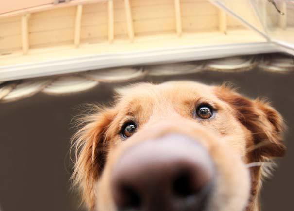 38 πορτραίτα σκύλων που θα λατρέψετε! (12)