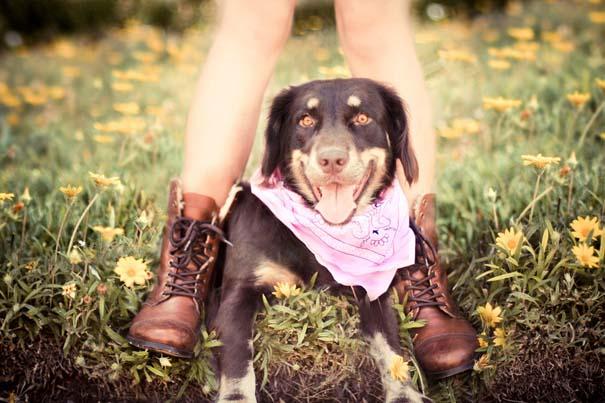 38 πορτραίτα σκύλων που θα λατρέψετε! (14)