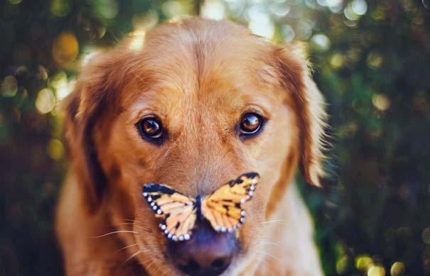 38 πορτραίτα σκύλων που θα λατρέψετε! (17)