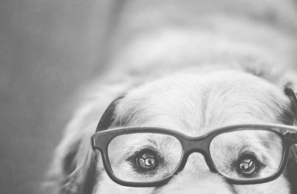38 πορτραίτα σκύλων που θα λατρέψετε! (21)