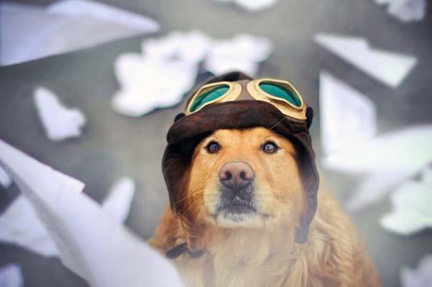 38 πορτραίτα σκύλων που θα λατρέψετε! (27)