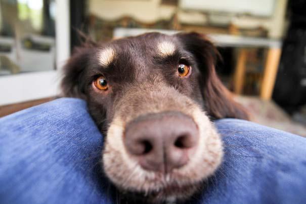 38 πορτραίτα σκύλων που θα λατρέψετε! (31)