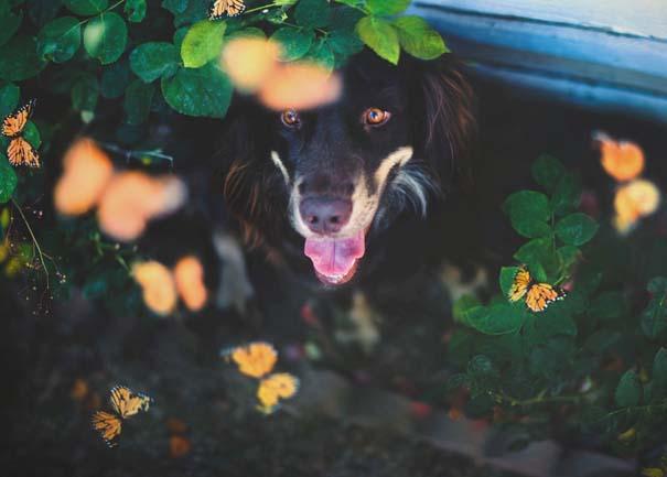 38 πορτραίτα σκύλων που θα λατρέψετε! (33)