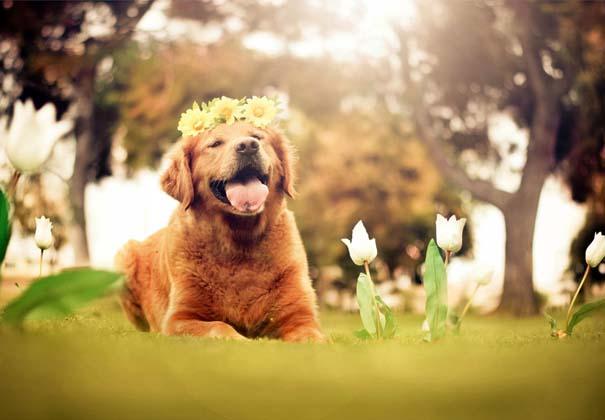 38 πορτραίτα σκύλων που θα λατρέψετε! (34)