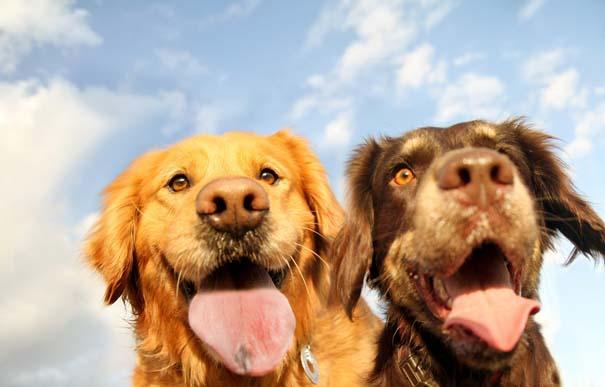 38 πορτραίτα σκύλων που θα λατρέψετε! (35)