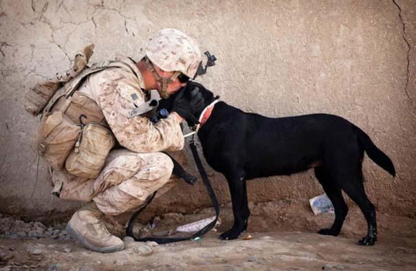 Σκύλοι: Οι καλύτεροι φίλοι του ανθρώπου (1)