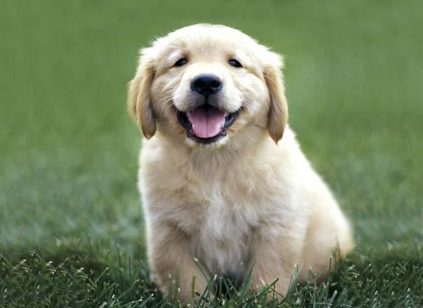 Σκύλοι: Οι καλύτεροι φίλοι του ανθρώπου (2)