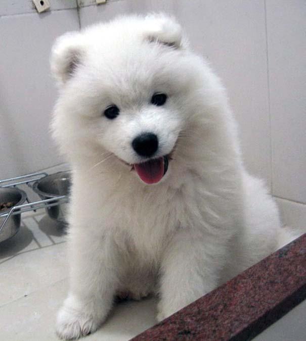 Σκύλοι: Οι καλύτεροι φίλοι του ανθρώπου (6)
