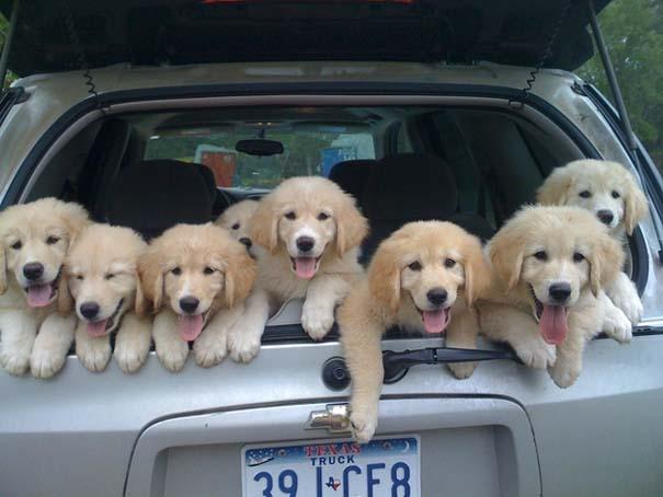 Σκύλοι: Οι καλύτεροι φίλοι του ανθρώπου (7)