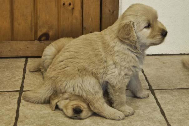 Σκύλοι: Οι καλύτεροι φίλοι του ανθρώπου (10)
