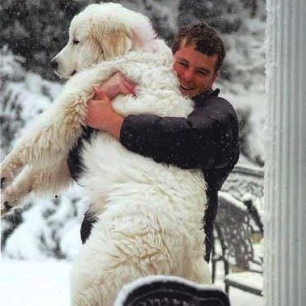 Σκύλοι: Οι καλύτεροι φίλοι του ανθρώπου (12)