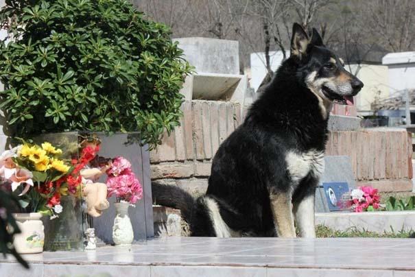 Σκύλοι: Οι καλύτεροι φίλοι του ανθρώπου (16)
