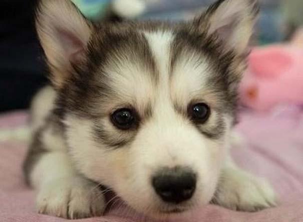 Σκύλοι: Οι καλύτεροι φίλοι του ανθρώπου (18)