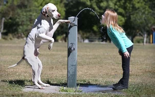 Σκύλοι: Οι καλύτεροι φίλοι του ανθρώπου (24)
