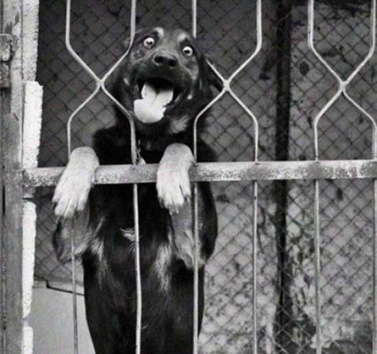 25 ζώα σε απίθανες γκριμάτσες (2)