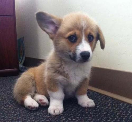 Οι 20 πιο ένοχοι σκύλοι (1)