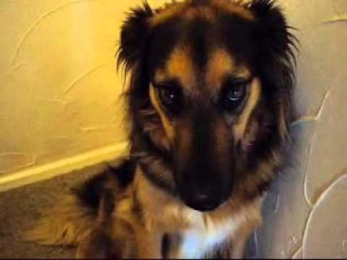 Οι 20 πιο ένοχοι σκύλοι (2)
