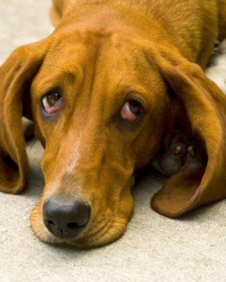 Οι 20 πιο ένοχοι σκύλοι (4)