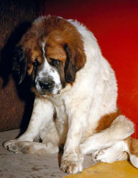 Οι 20 πιο ένοχοι σκύλοι (5)
