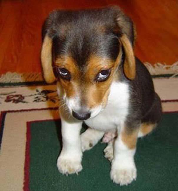 Οι 20 πιο ένοχοι σκύλοι (6)