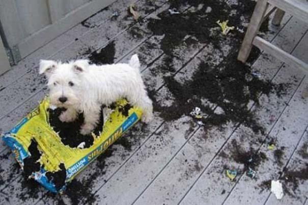 Οι 20 πιο ένοχοι σκύλοι (8)