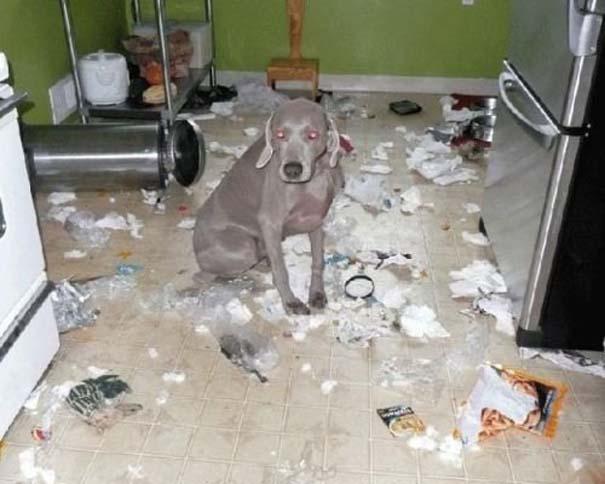 Οι 20 πιο ένοχοι σκύλοι (9)