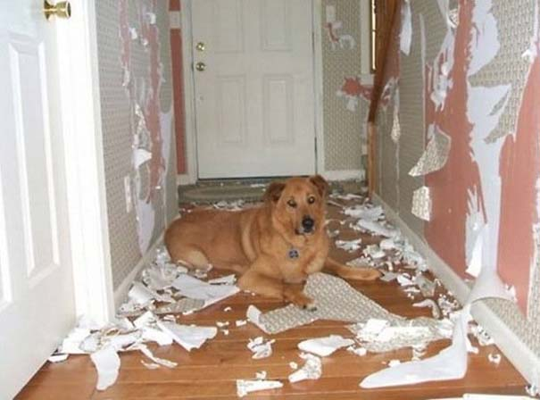 Οι 20 πιο ένοχοι σκύλοι (10)