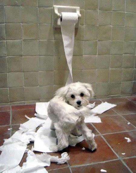 Οι 20 πιο ένοχοι σκύλοι (11)