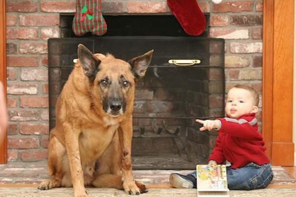 Οι 20 πιο ένοχοι σκύλοι (12)