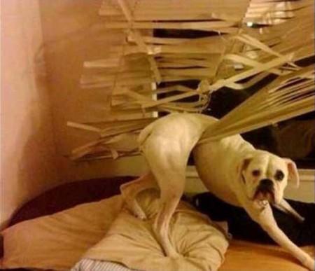 Οι 20 πιο ένοχοι σκύλοι (13)