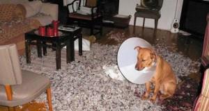 Οι 20 πιο ένοχοι σκύλοι