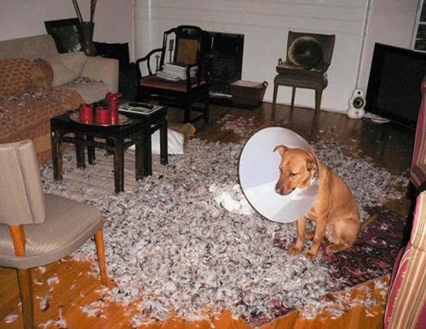 Οι 20 πιο ένοχοι σκύλοι (14)
