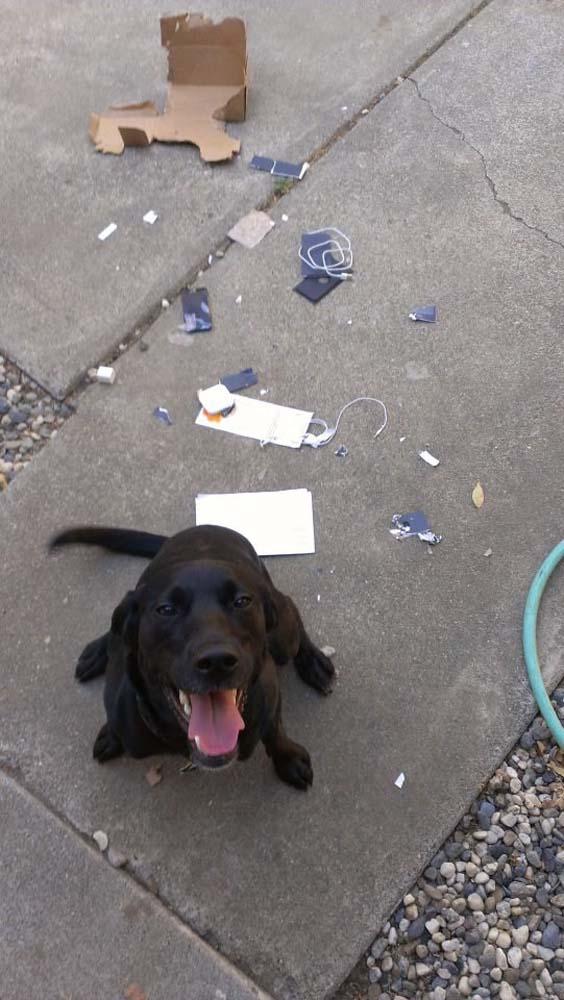 Οι 20 πιο ένοχοι σκύλοι (15)