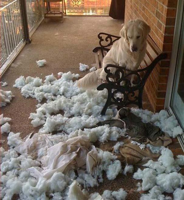 Οι 20 πιο ένοχοι σκύλοι (16)