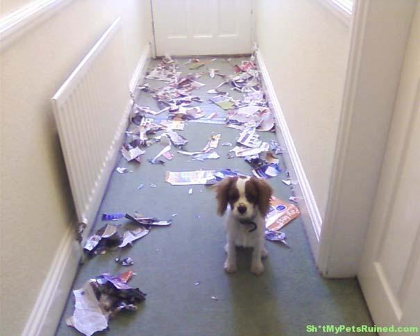 Οι 20 πιο ένοχοι σκύλοι (19)