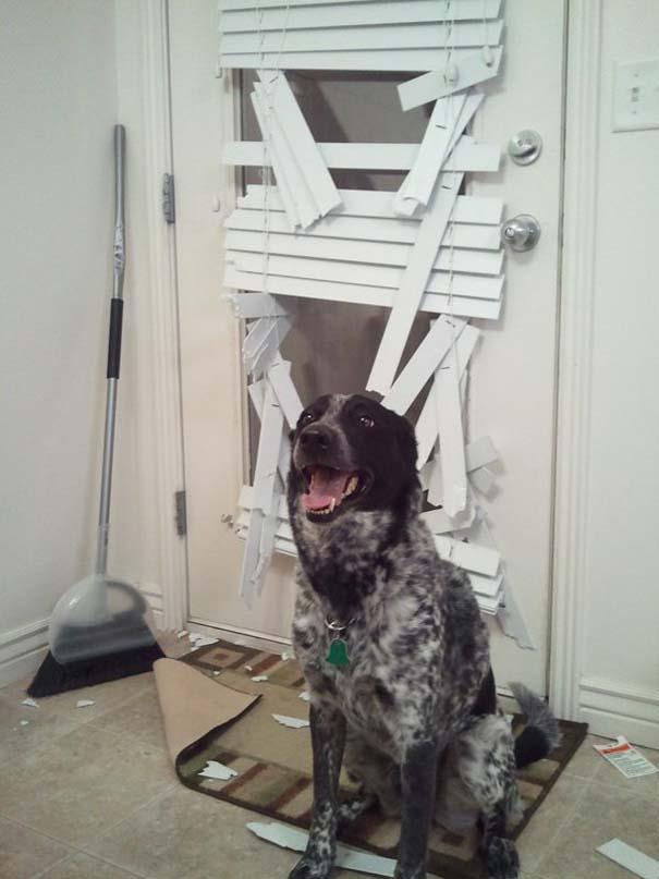Οι 20 πιο ένοχοι σκύλοι (20)