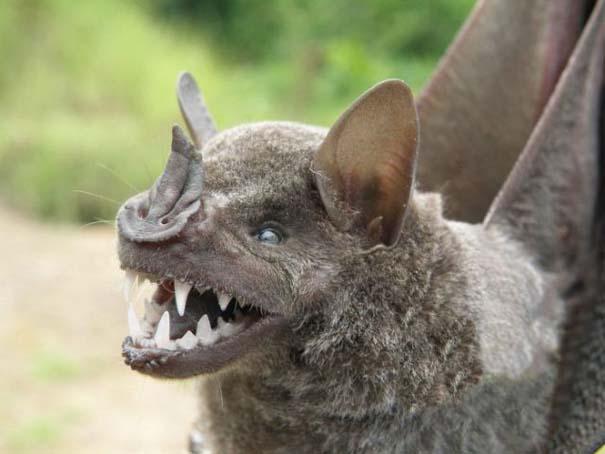 Ο «διάβολος» του Περού (9)