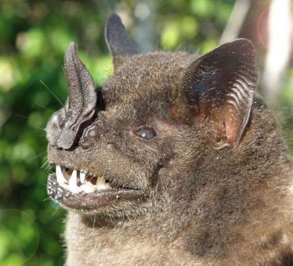 Ο «διάβολος» του Περού (14)