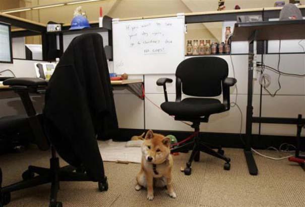 Η δουλειά στα γραφεία της Google είναι... διασκέδαση (5)