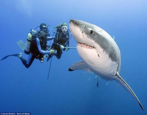 Δύτης ισχυρίζεται πως οι καρχαρίες είναι ακίνδυνοι, το «αποδεικνύει» με φωτογραφίες (1)