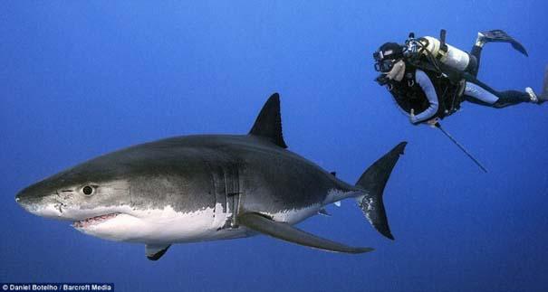 Δύτης ισχυρίζεται πως οι καρχαρίες είναι ακίνδυνοι, το «αποδεικνύει» με φωτογραφίες (2)